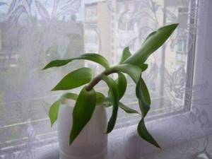 Как подготовить лечебные части растения