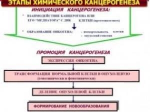 Вопрос Химические канцерогены, их классификация, проканцерогены и конечные канцерогены. Коканцерогены и синканцерогены. Этапы химического канцерогенеза