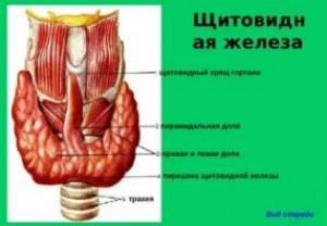Аномалии развития щитовидной железы на УЗИ (лекция на Диагностере) – Диагностер