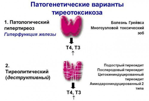 Процесс секреции