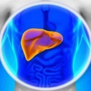 Повышенная эхогенность печени на УЗИ: что это значит и каковы причины