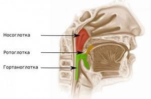 Рак горла: стадии, причины, признаки, симптомы и лечение