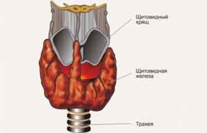 Стадии развития узлов