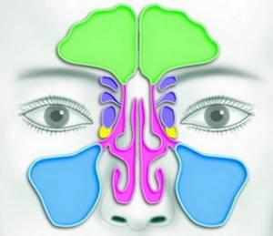 Кт пазух носа: цели и особенности выполнения