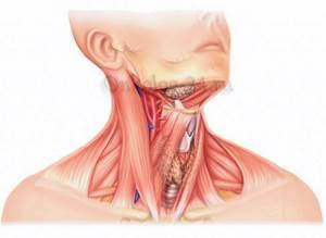 Развитие рака шеи, как оно происходит?