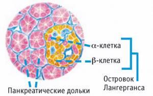 Эффекты, которые оказывает гормон на организм